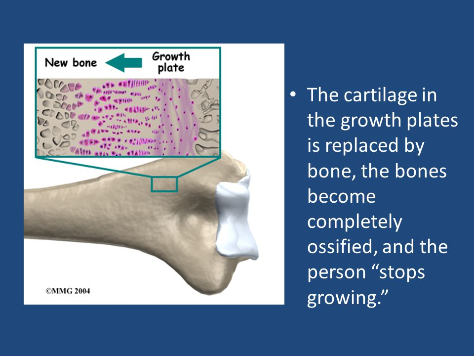 c. A place where one bone attaches to another is called a joint.