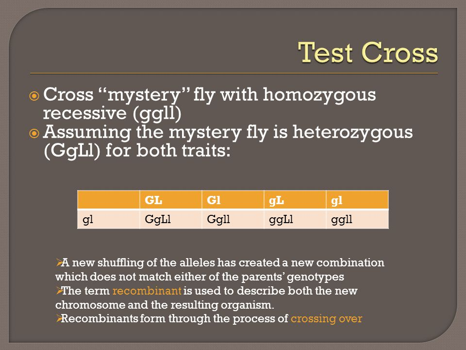 " Cross ""mystery"" fly with homozygous recessive (ggll)  Assuming the mystery fly is heterozygous (GgLl) for both traits: GLGlgLgl GgLlGgllggLlggll "