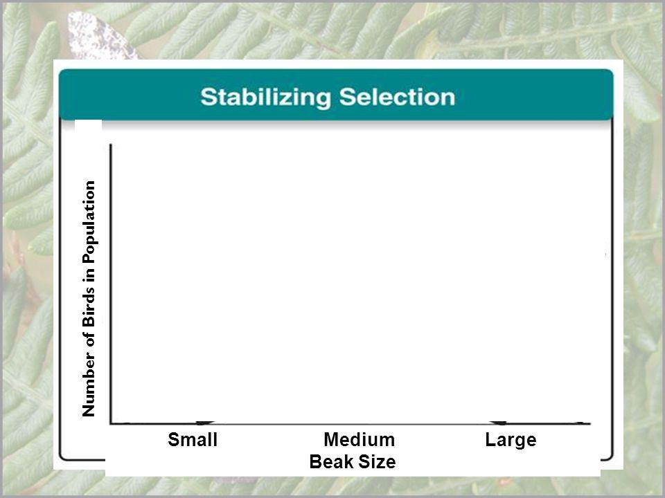 Beak Size Number of Birds in Population Small Medium Large Beak Size