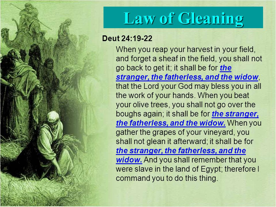 Deut 24:19-22 When you reap your harvest in your field, and forget a sheaf in the field, you shall not go back to get it; it shall be for the stranger