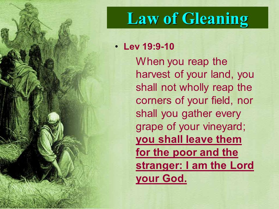 Lev 19:9-10 When you reap the harvest of your land, you shall not wholly reap the corners of your field, nor shall you gather every grape of your vine