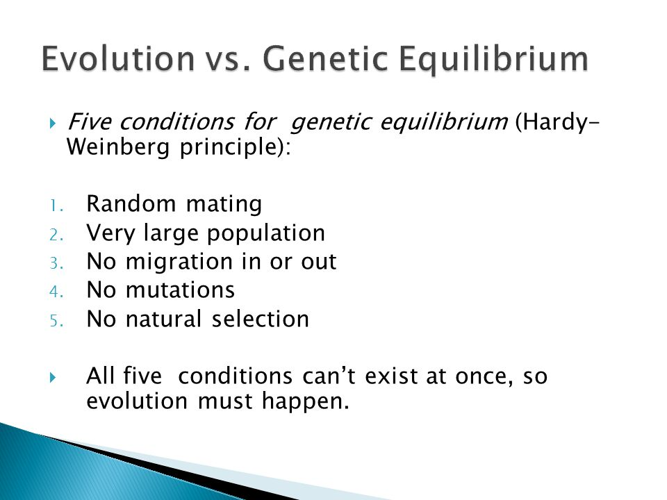  Five conditions for genetic equilibrium (Hardy- Weinberg principle): 1.