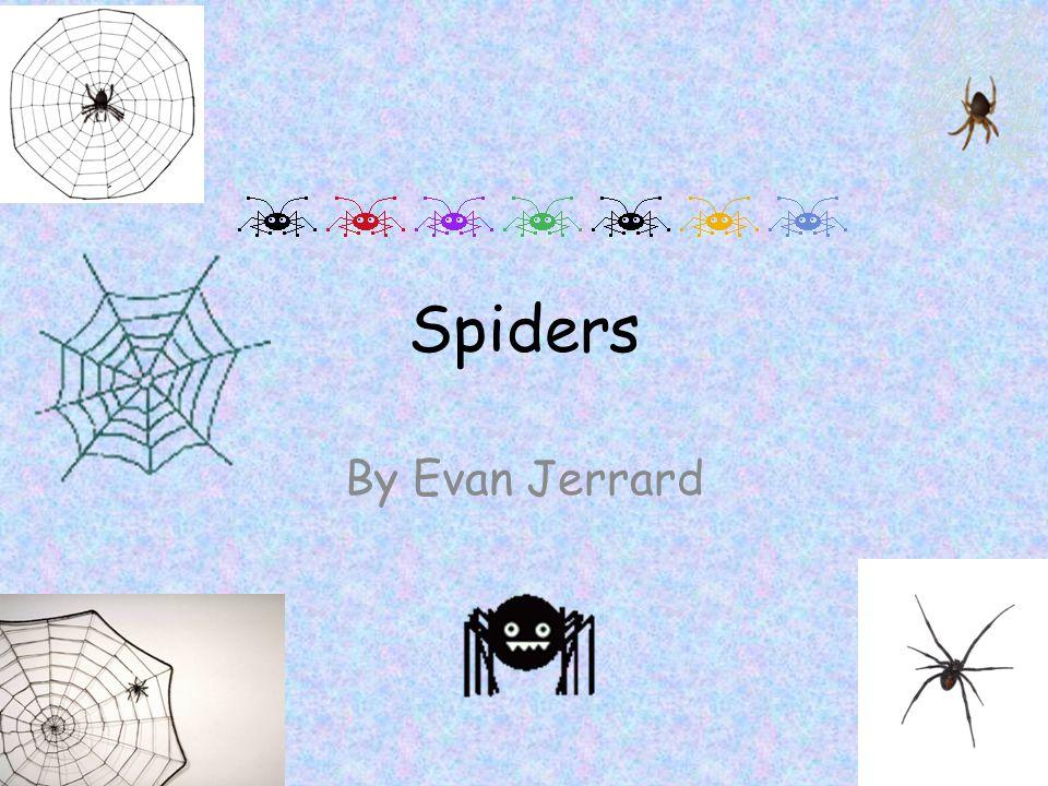 Spiders By Evan Jerrard