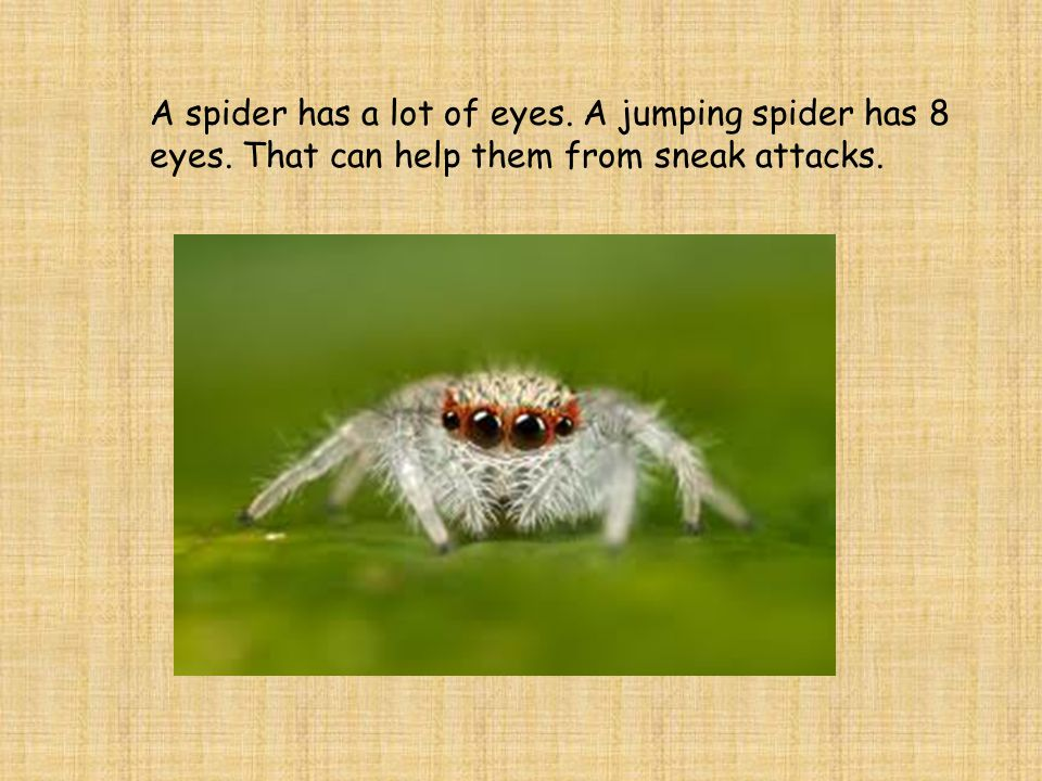 Spiders have fangs which they use to bite their prey.