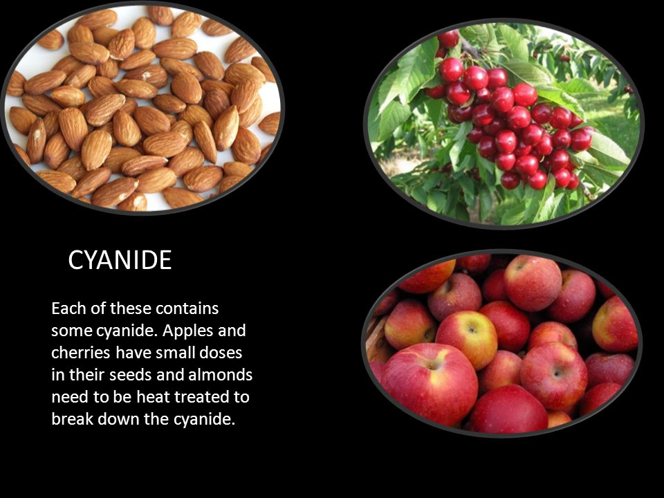 CYANIDE Each of these contains some cyanide. Apples and cherries have small doses in their seeds and almonds need to be heat treated to break down the