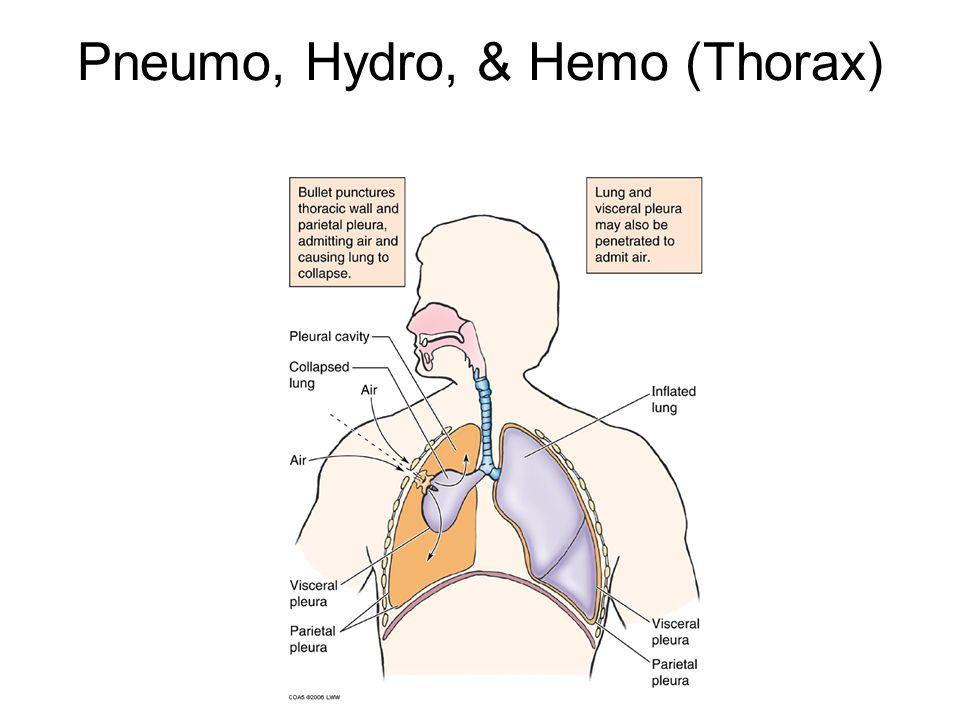 Pneumo, Hydro, & Hemo (Thorax)