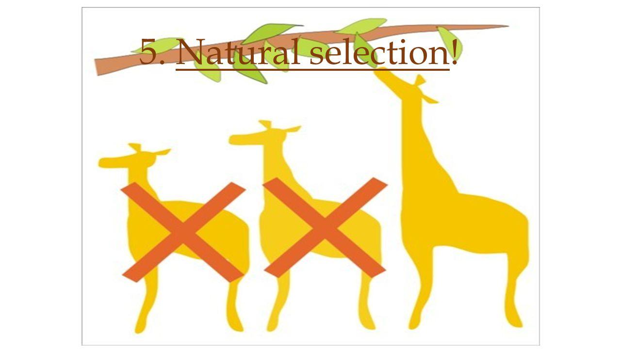 5. Natural selection!