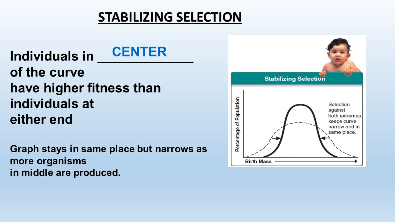 STABILIZING SELECTION Individuals in _____________ of the curve have higher fitness than individuals at either end Graph stays in same place but narro