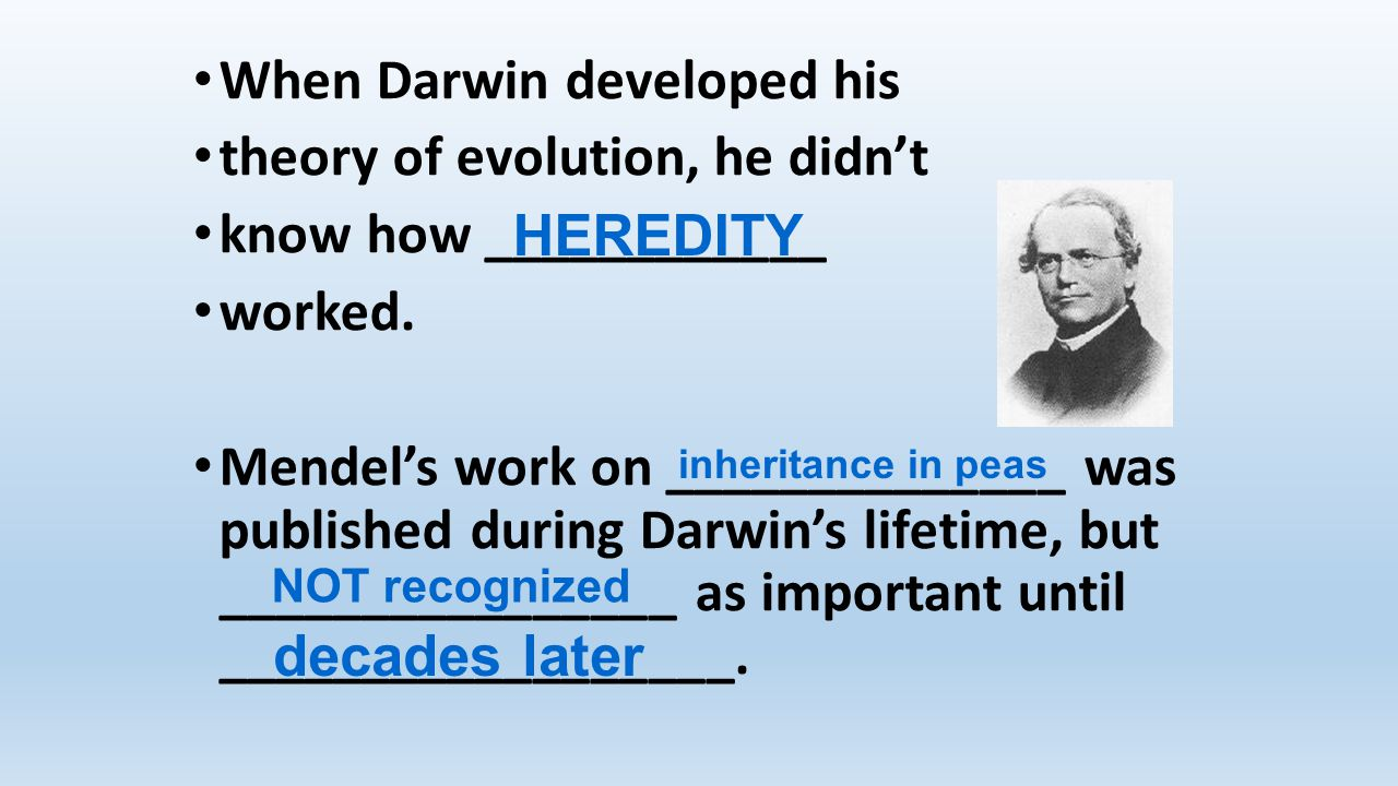 When Darwin developed his theory of evolution, he didn't know how ____________ worked. Mendel's work on ______________ was published during Darwin's l