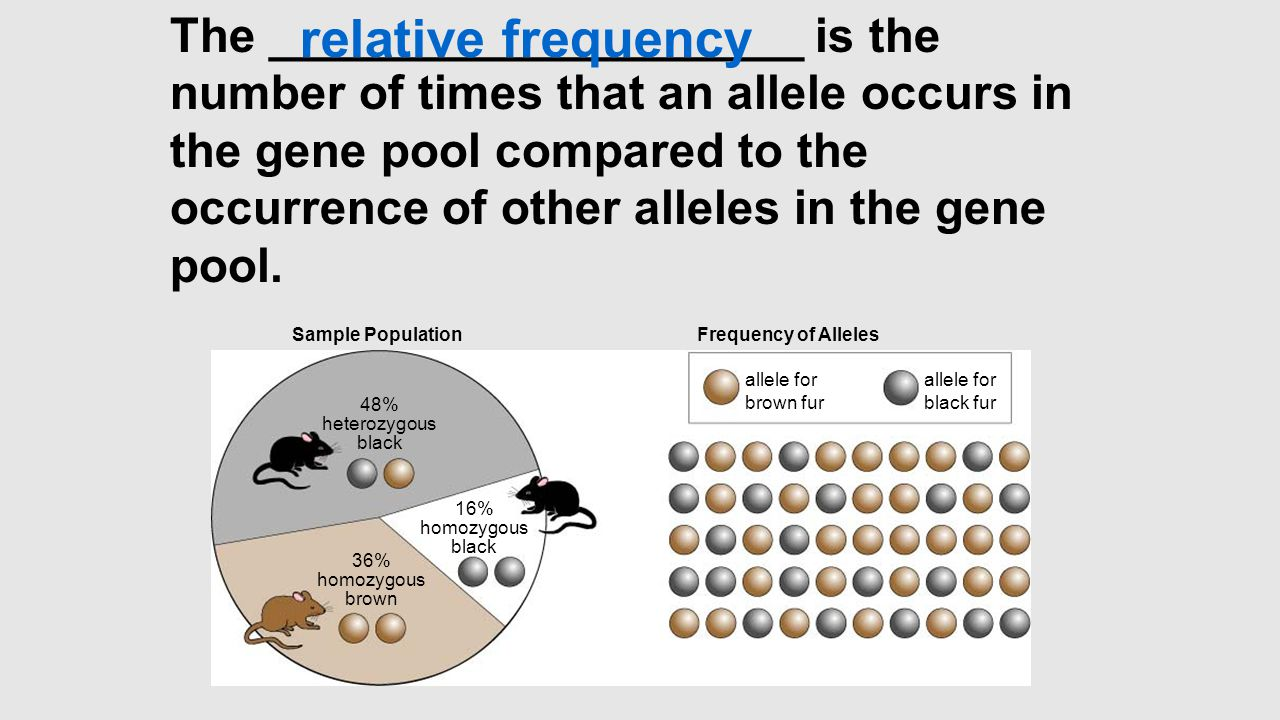 Sample Population 48% heterozygous black 36% homozygous brown 16% homozygous black Frequency of Alleles allele for brown fur allele for black fur The ____________________ is the number of times that an allele occurs in the gene pool compared to the occurrence of other alleles in the gene pool.