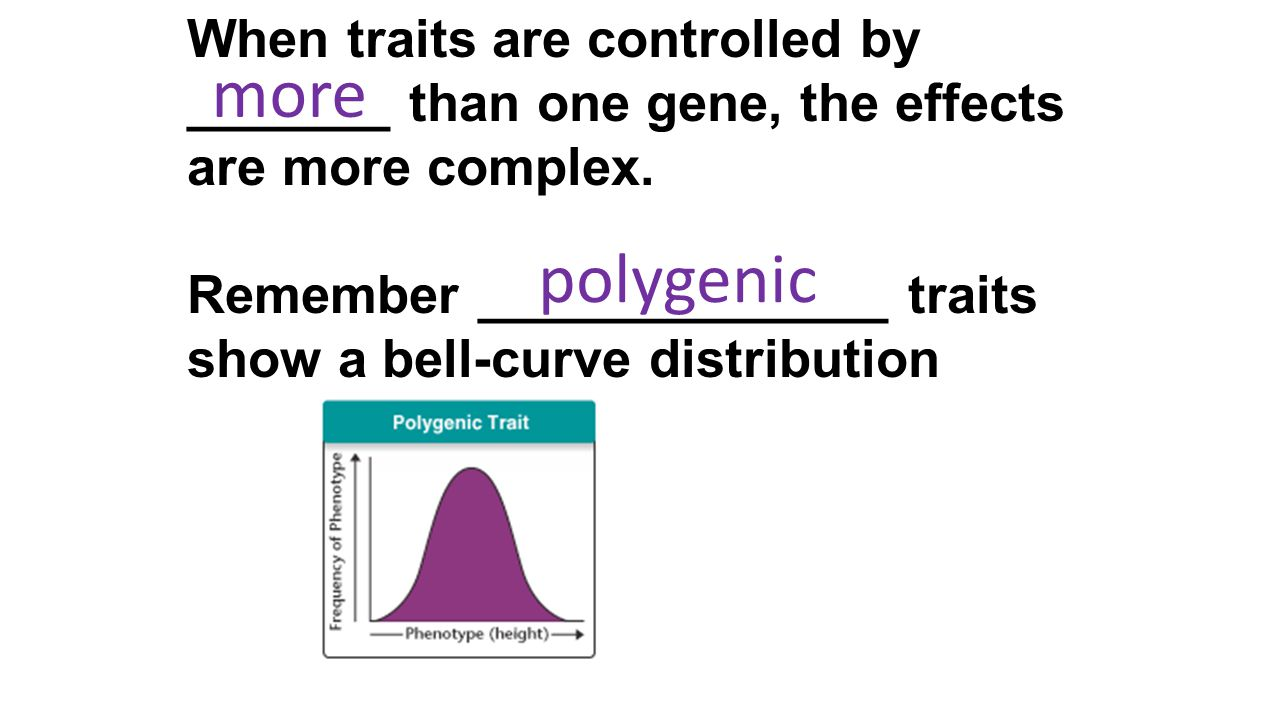 When traits are controlled by _______ than one gene, the effects are more complex. Remember ______________ traits show a bell-curve distribution more