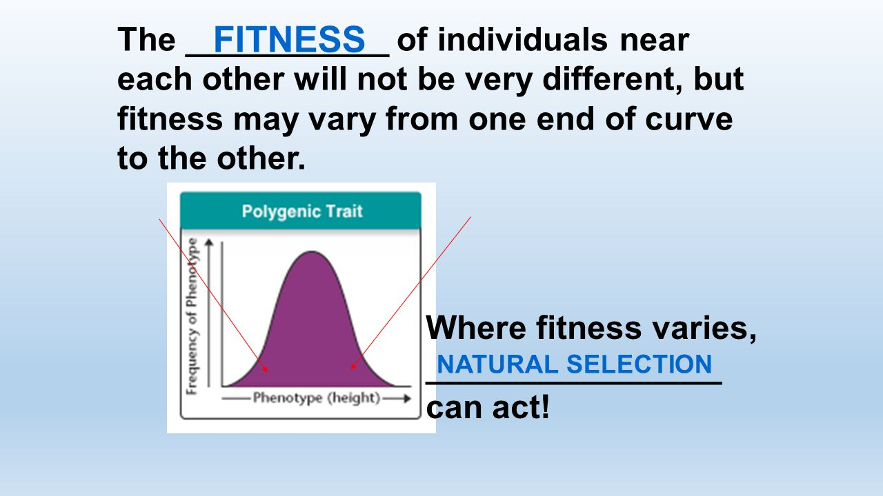 The ___________ of individuals near each other will not be very different, but fitness may vary from one end of curve to the other. FITNESS Where fitn