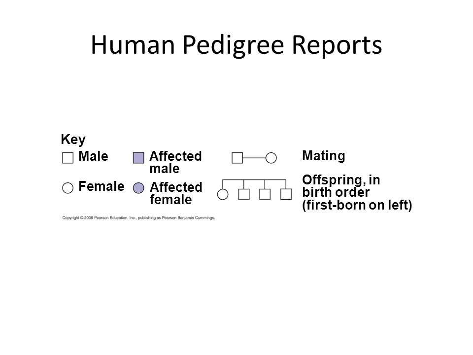 Key Male Female Affected male Affected female Mating Offspring, in birth order (first-born on left) Human Pedigree Reports