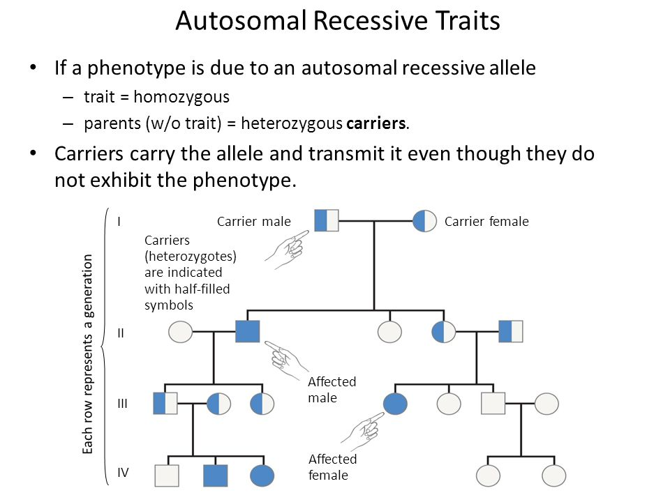 Autosomal Recessive Traits If a phenotype is due to an autosomal recessive allele – trait = homozygous – parents (w/o trait) = heterozygous carriers.