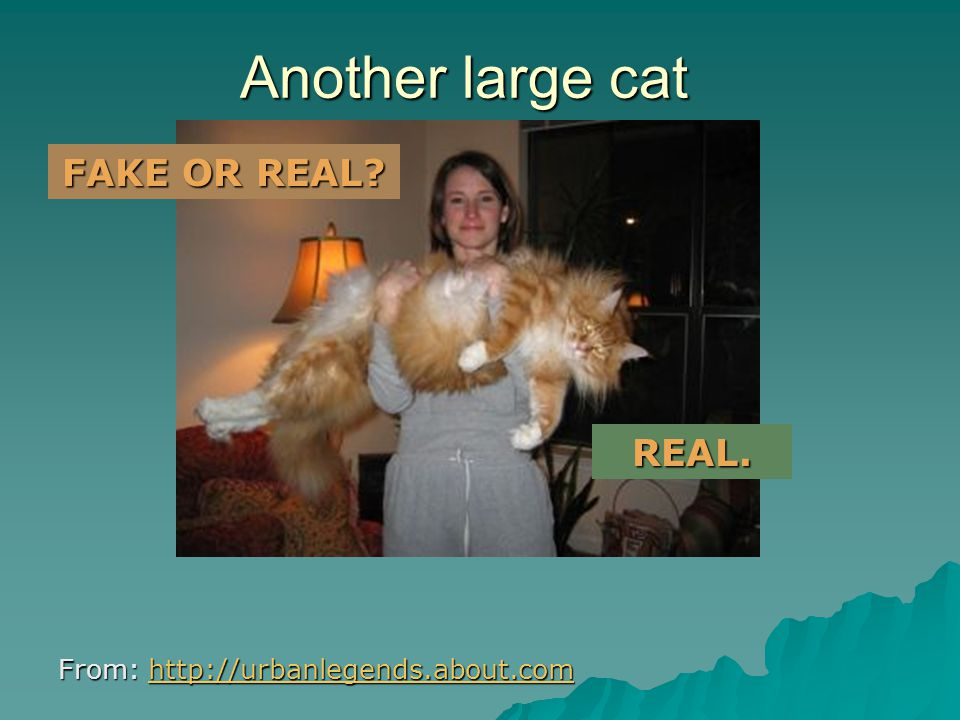 A large cat From: http://urbanlegends.about.com http://urbanlegends.about.com FAKE. FAKE OR REAL