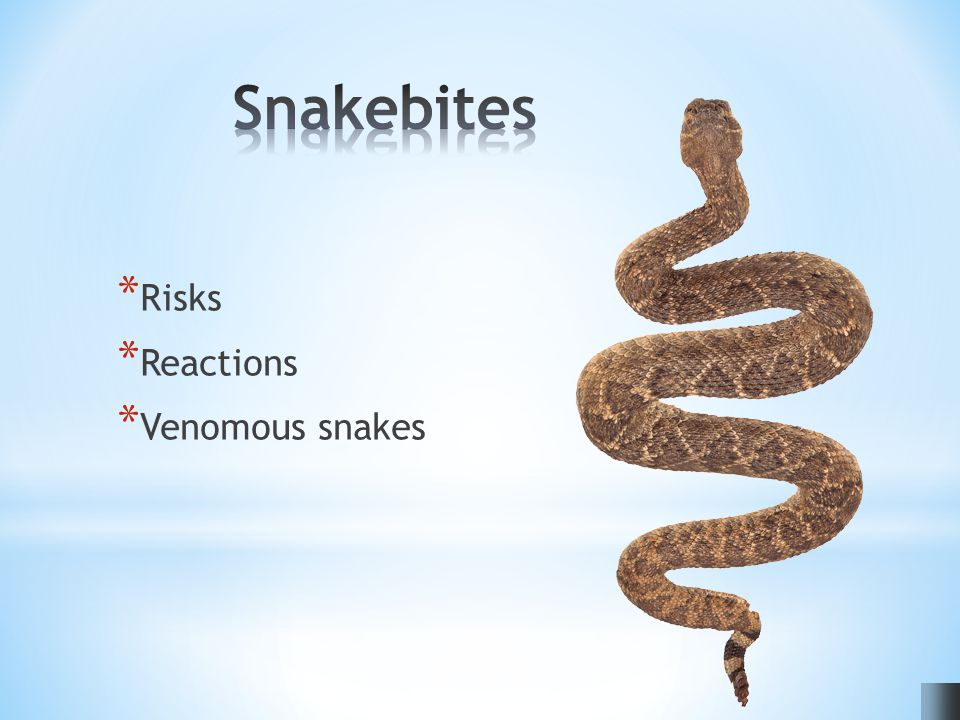 * Risks * Reactions * Venomous snakes