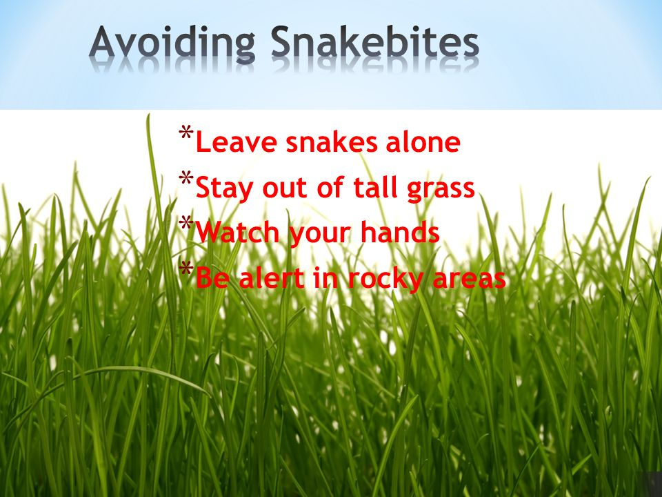 * Leave snakes alone * Stay out of tall grass * Watch your hands * Be alert in rocky areas