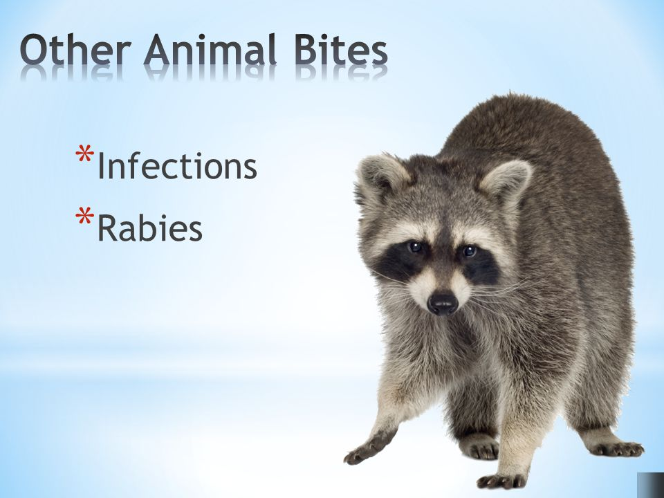 * Infections * Rabies