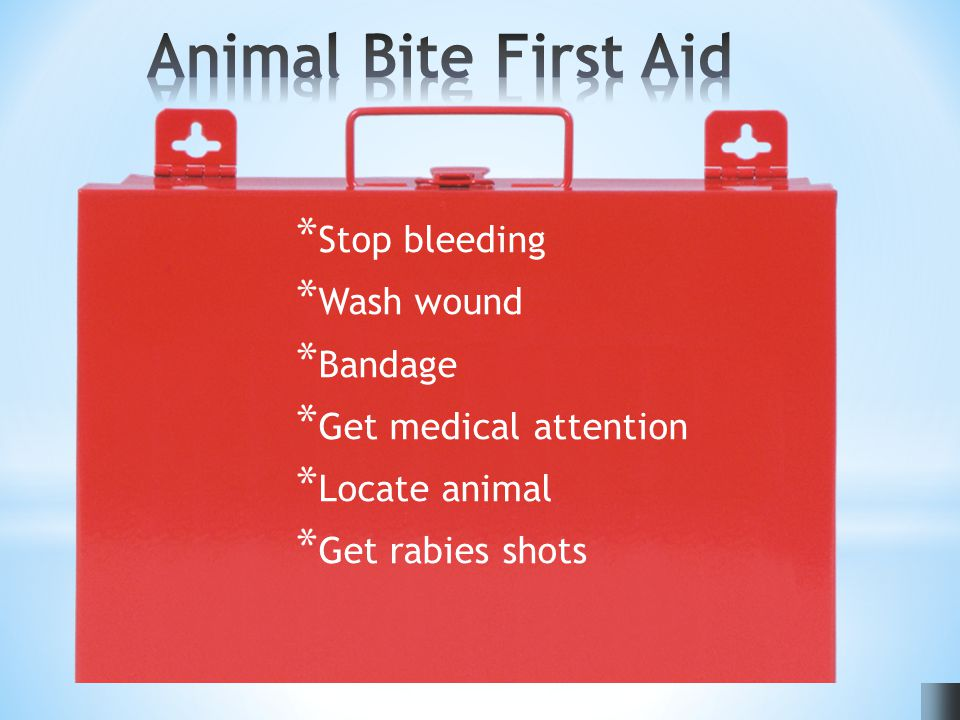 * Stop bleeding * Wash wound * Bandage * Get medical attention * Locate animal * Get rabies shots