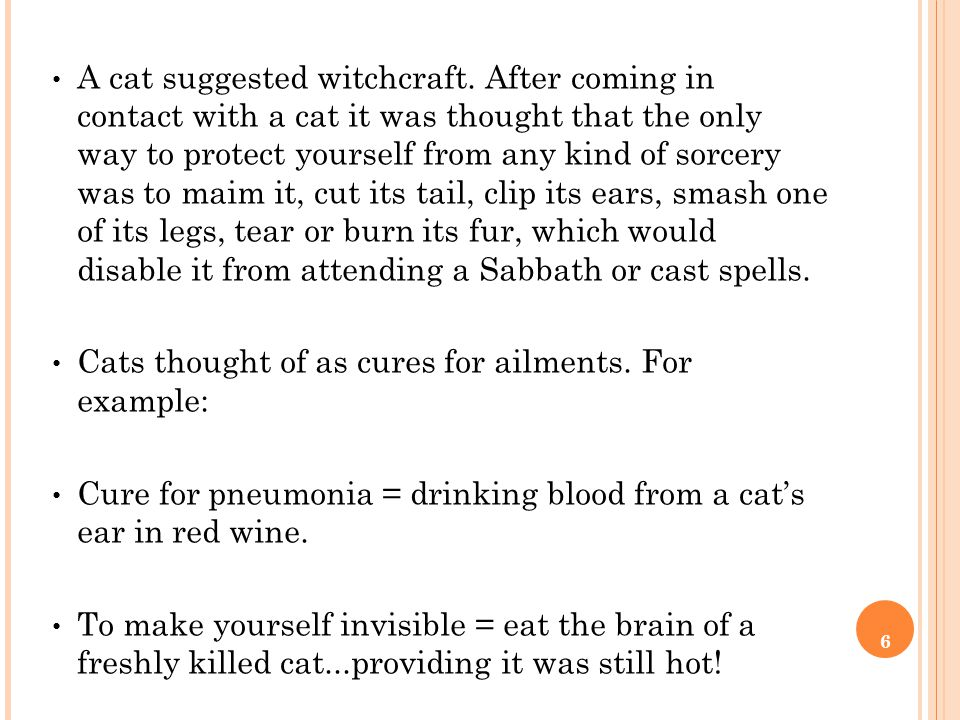 6 A cat suggested witchcraft.