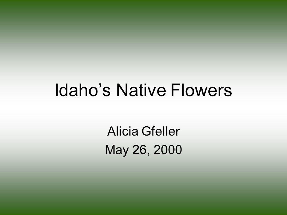 Idaho's Native Flowers Alicia Gfeller May 26, 2000