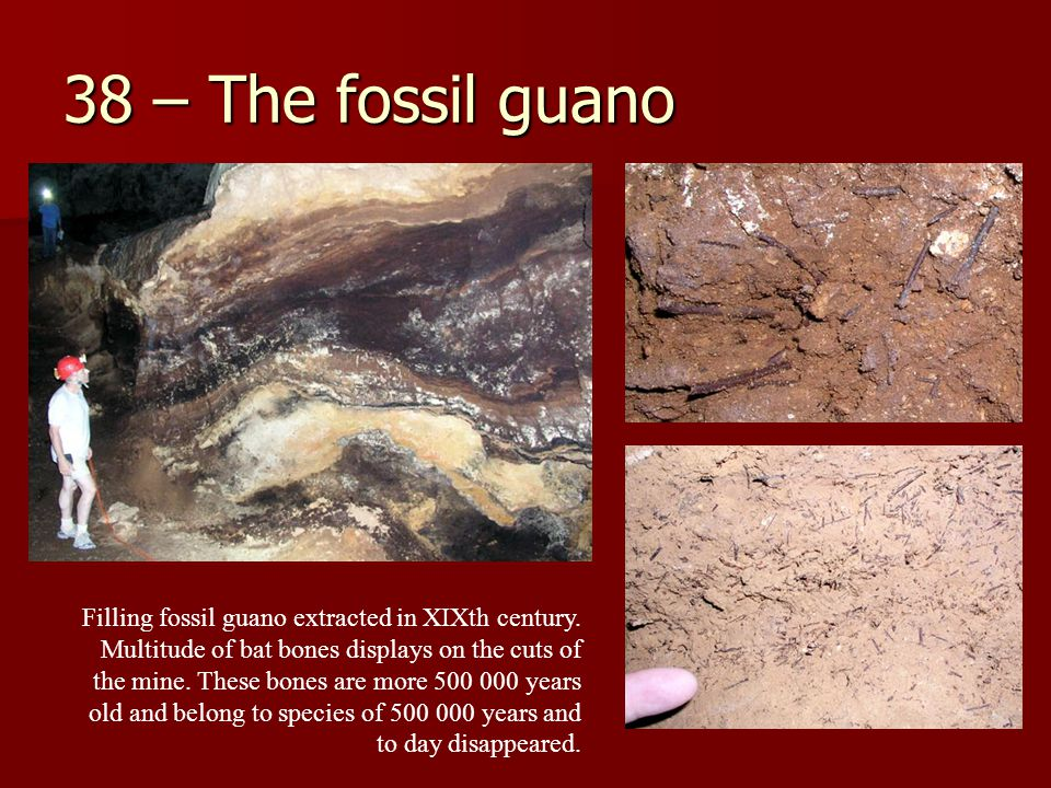 38 – The fossil guano Filling fossil guano extracted in XIXth century.