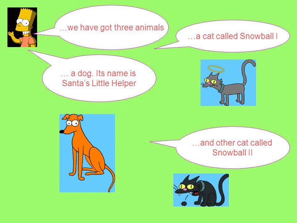 …we have got three animals … a dog.
