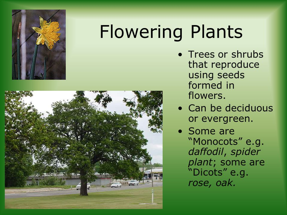 Flowering Plants Trees or shrubs that reproduce using seeds formed in flowers.