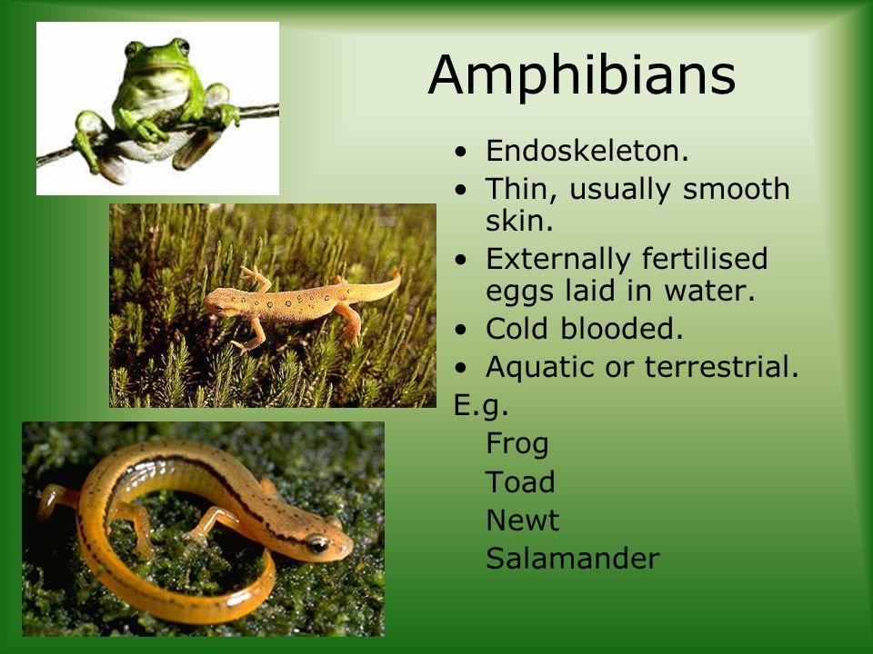 Amphibians Endoskeleton. Thin, usually smooth skin.