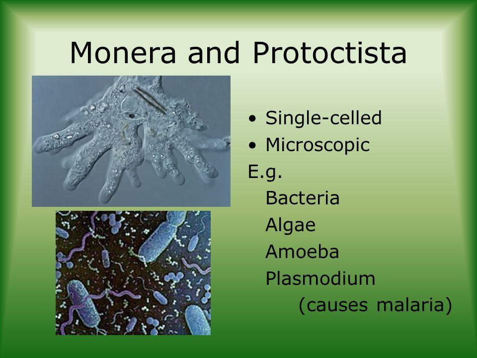 Monera and Protoctista Single-celled Microscopic E.g.