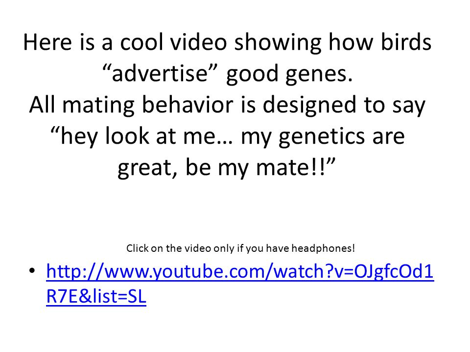 "Here is a cool video showing how birds ""advertise"" good genes. All mating behavior is designed to say ""hey look at me… my genetics are great, be my ma"
