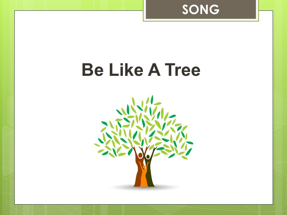 Be Like A Tree SONG