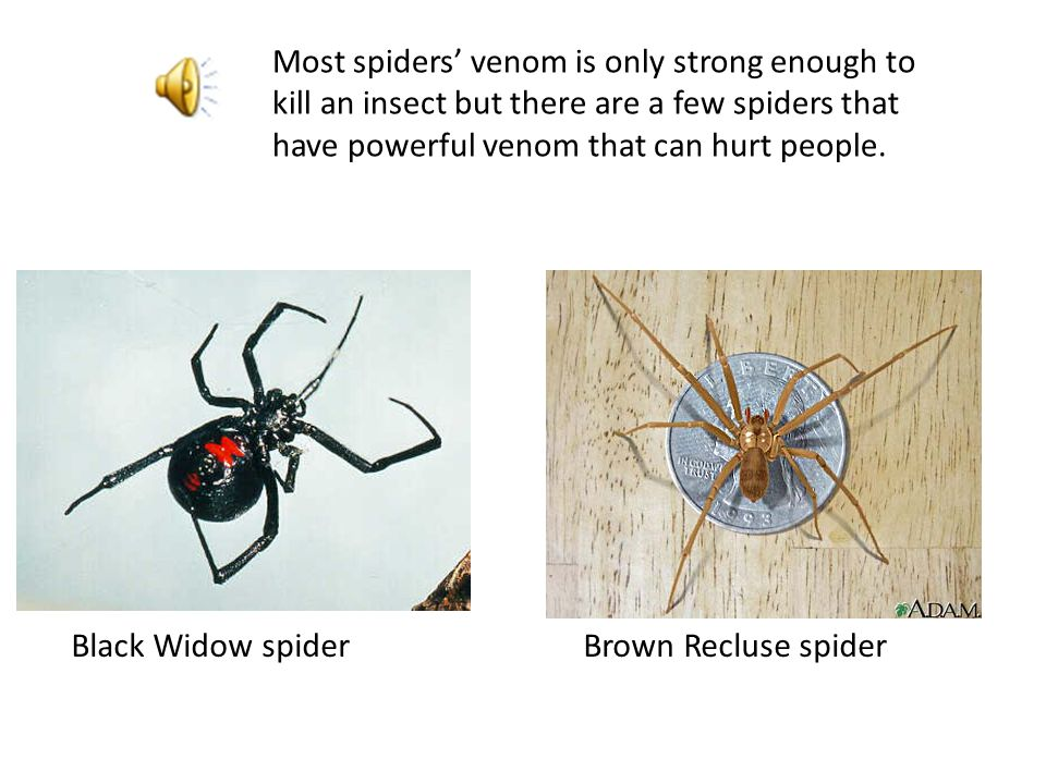 // Some people get afraid whenever they see a spider, but spiders will never attack a person.