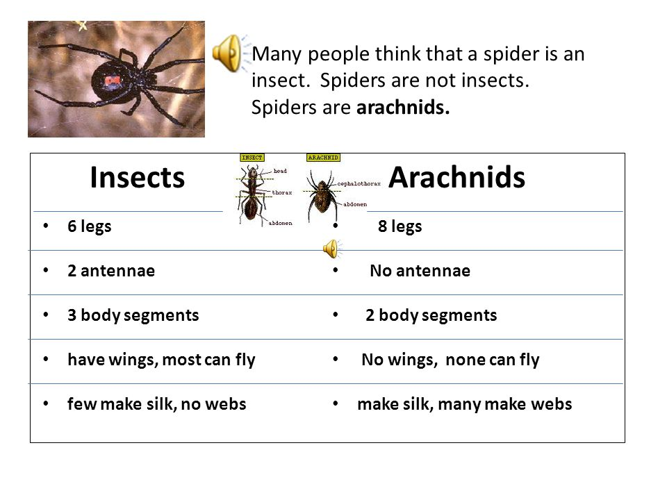 Click on the icon to hear the words Spiders Mr. Harper's science mini lesson with audio read along