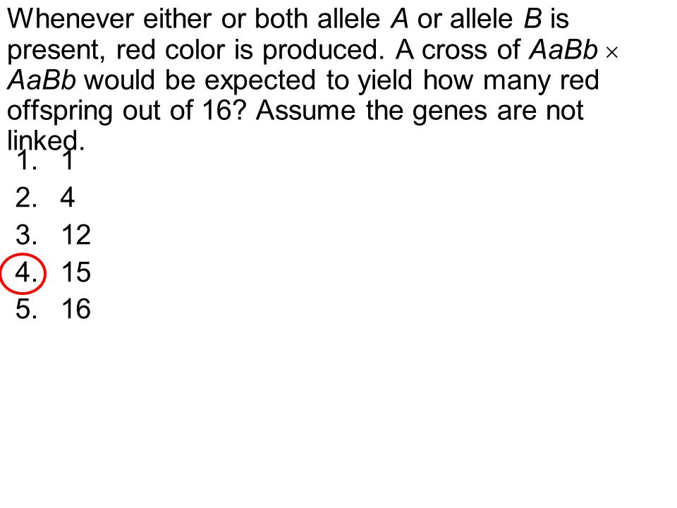 Whenever either or both allele A or allele B is present, red color is produced.
