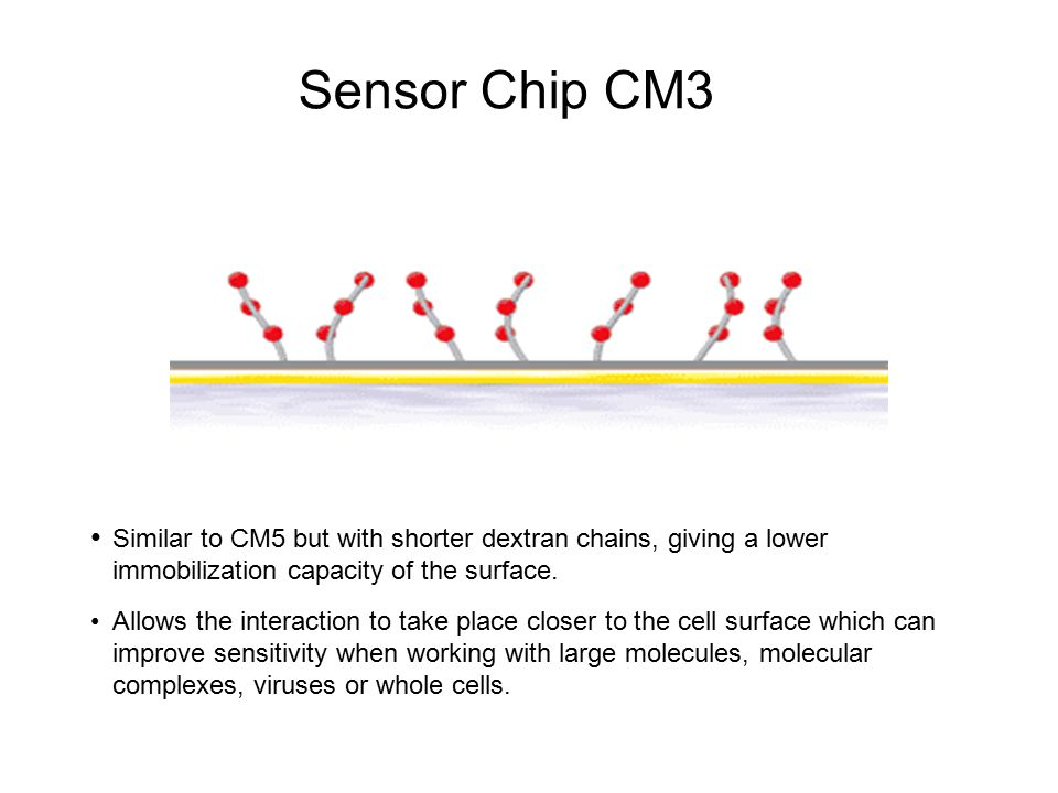 Sensor Chip CM3 Similar to CM5 but with shorter dextran chains, giving a lower immobilization capacity of the surface. Allows the interaction to take