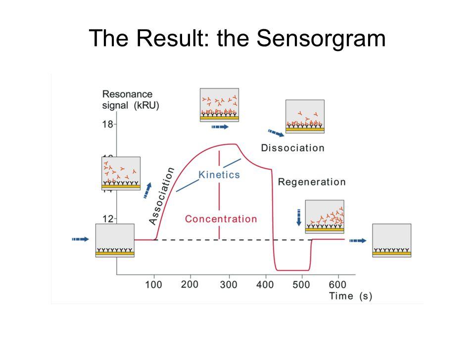 The Result: the Sensorgram