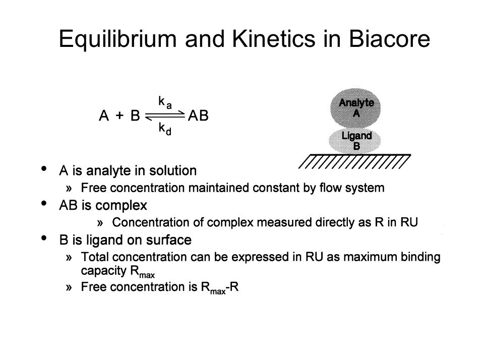 Equilibrium and Kinetics in Biacore