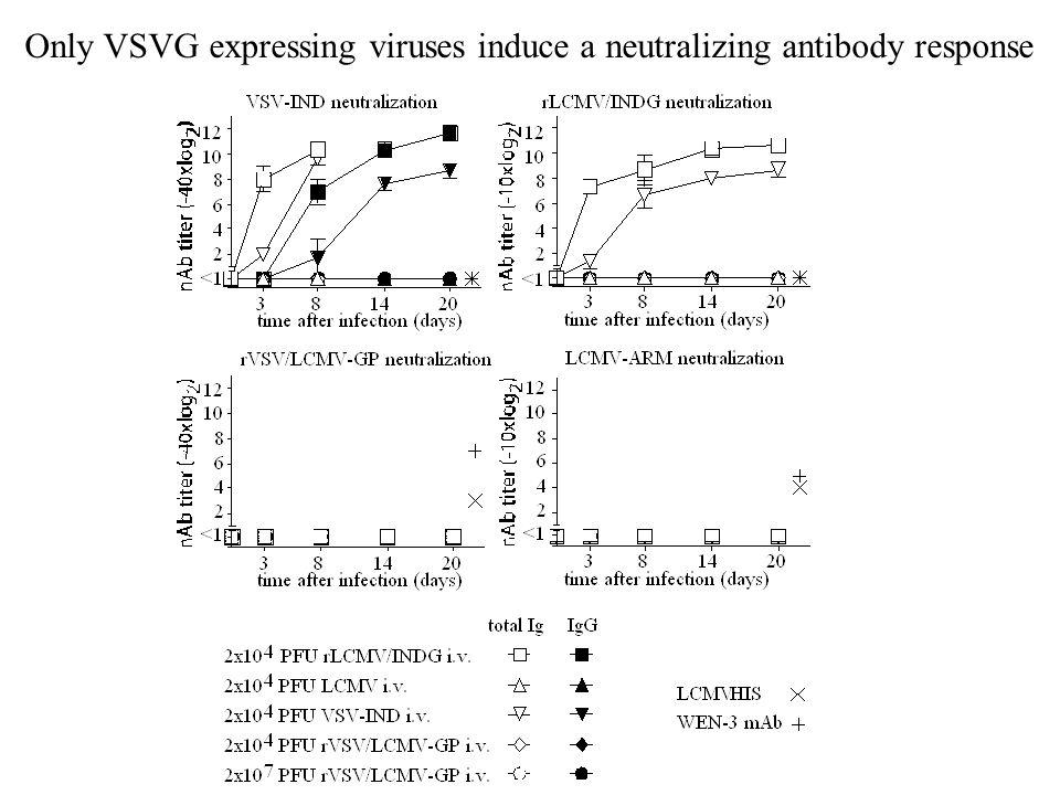 Only VSVG expressing viruses induce a neutralizing antibody response