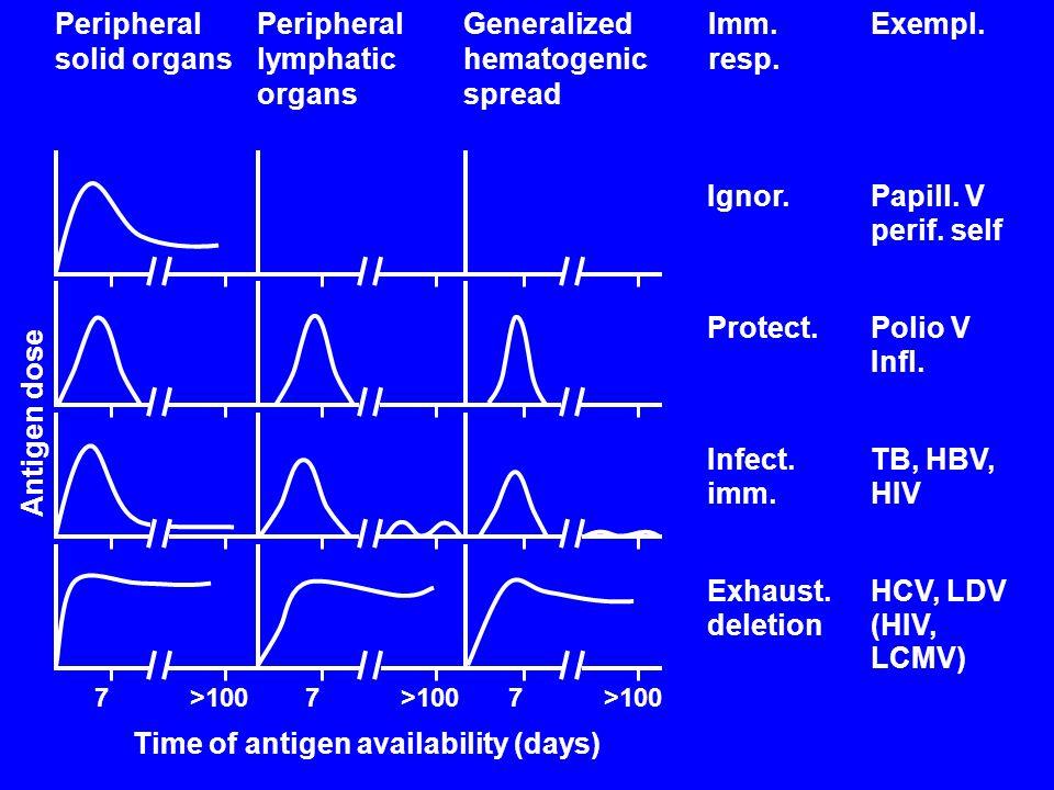 Exempl. Ignor. Protect. Infect. imm. Exhaust. deletion Papill. V perif. self Polio V Infl. TB, HBV, HIV HCV, LDV (HIV, LCMV) Peripheral solid organs P