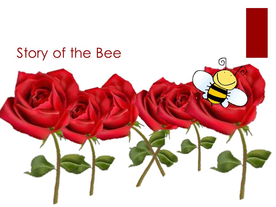 Story of the Bee