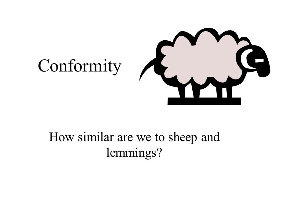 Conformity How similar are we to sheep and lemmings