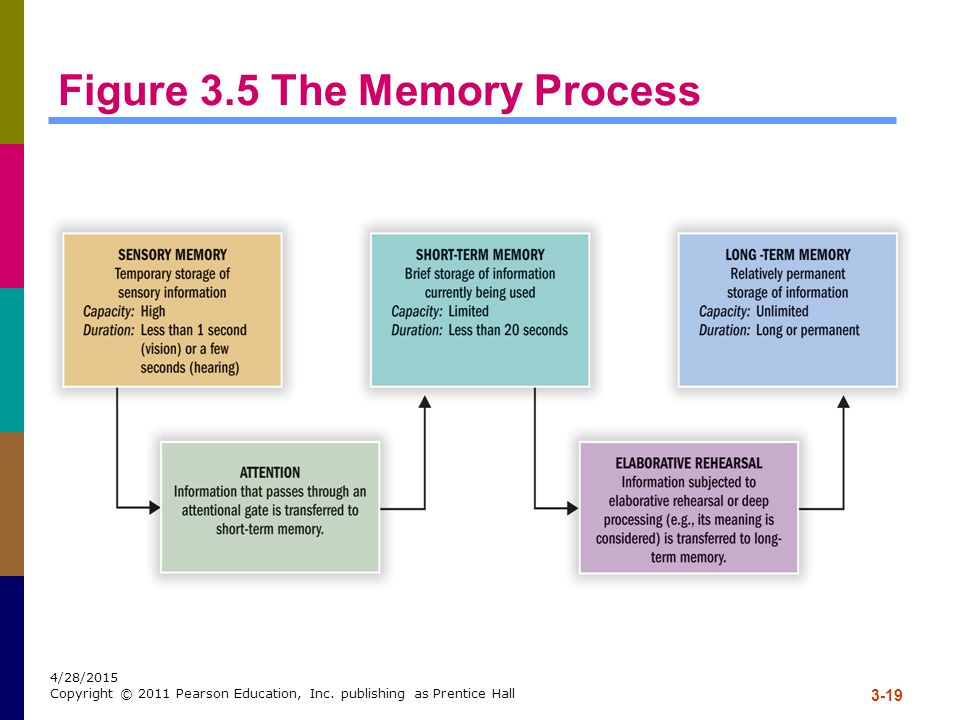 3-19 4/28/2015 Copyright © 2011 Pearson Education, Inc. publishing as Prentice Hall Figure 3.5 The Memory Process