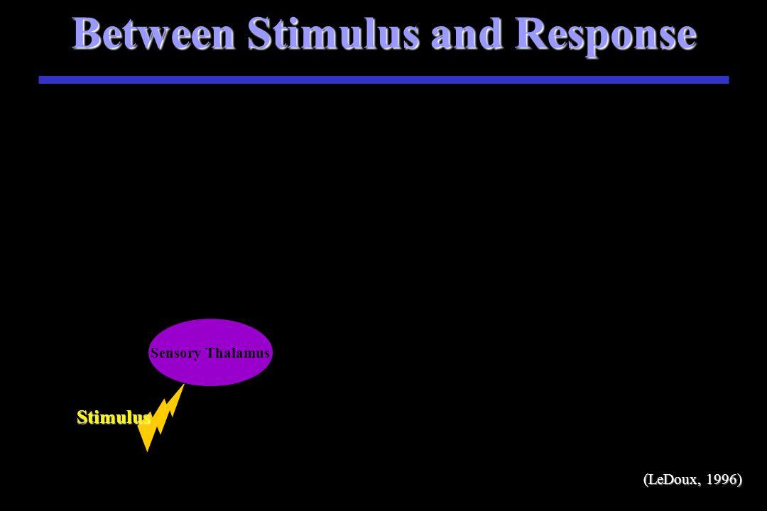 Between Stimulus and Response Stimulus S Stimulus (LeDoux, 1996)