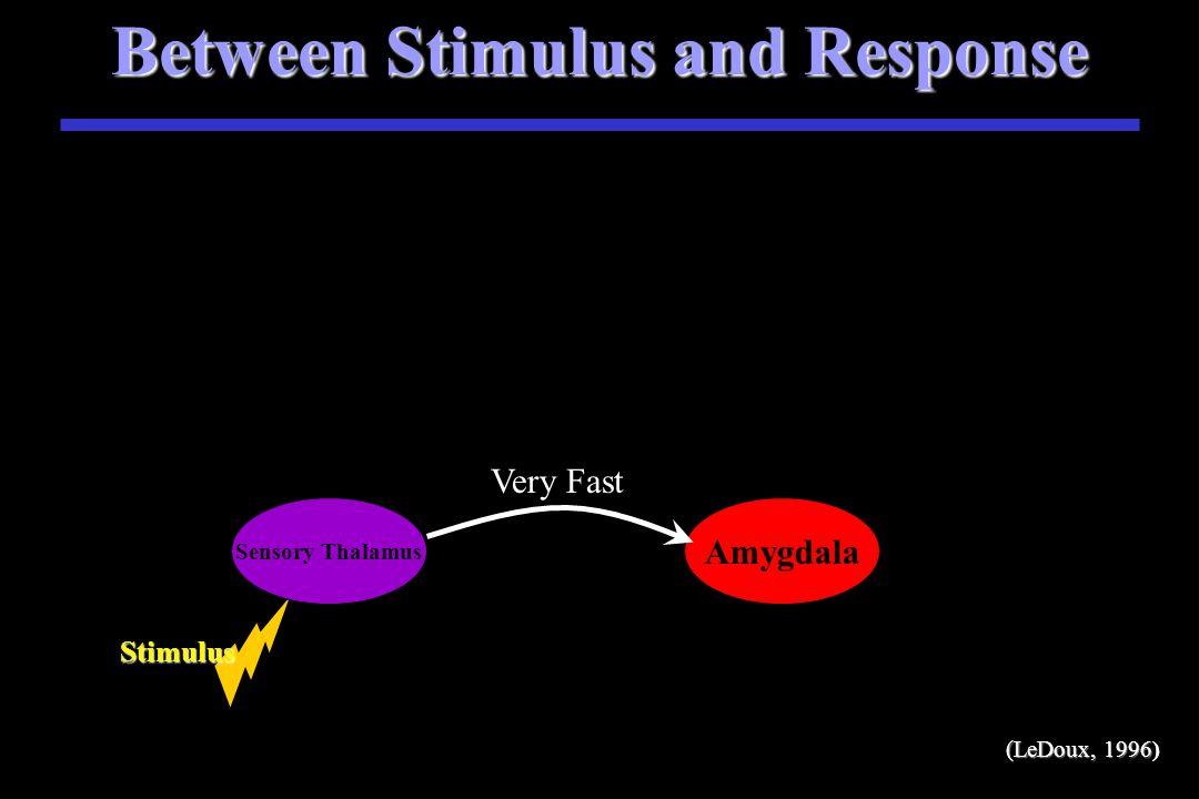 Between Stimulus and Response Stimulus S Stimulus Sensory Thalamus (LeDoux, 1996)