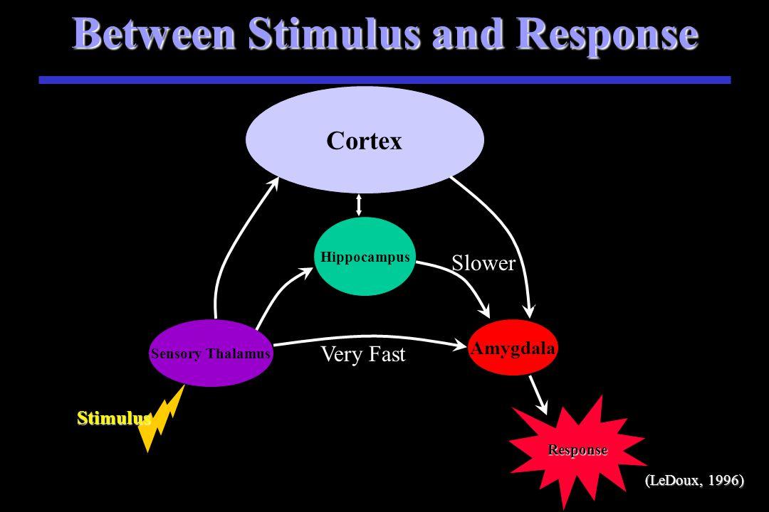Between Stimulus and Response Stimulus S Stimulus Sensory Thalamus Amygdala Cortex Very Fast Slower Hippocampus (LeDoux, 1996)