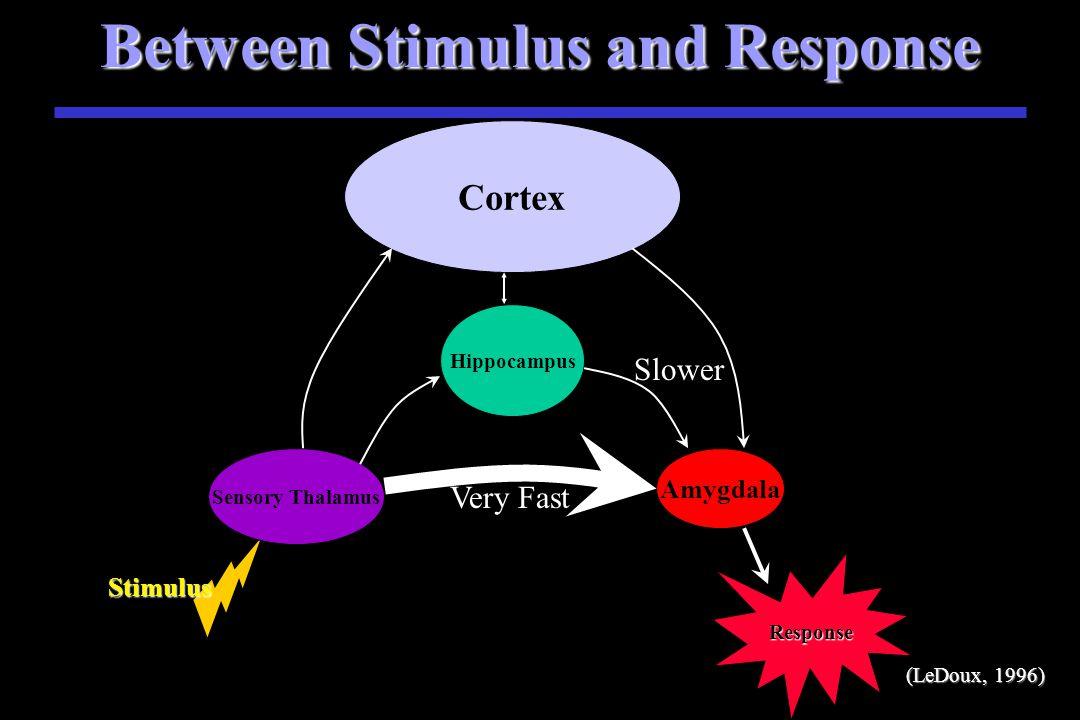 Between Stimulus and Response Stimulus S Stimulus Sensory Thalamus Amygdala Cortex Very Fast Slower Hippocampus Response (LeDoux, 1996)