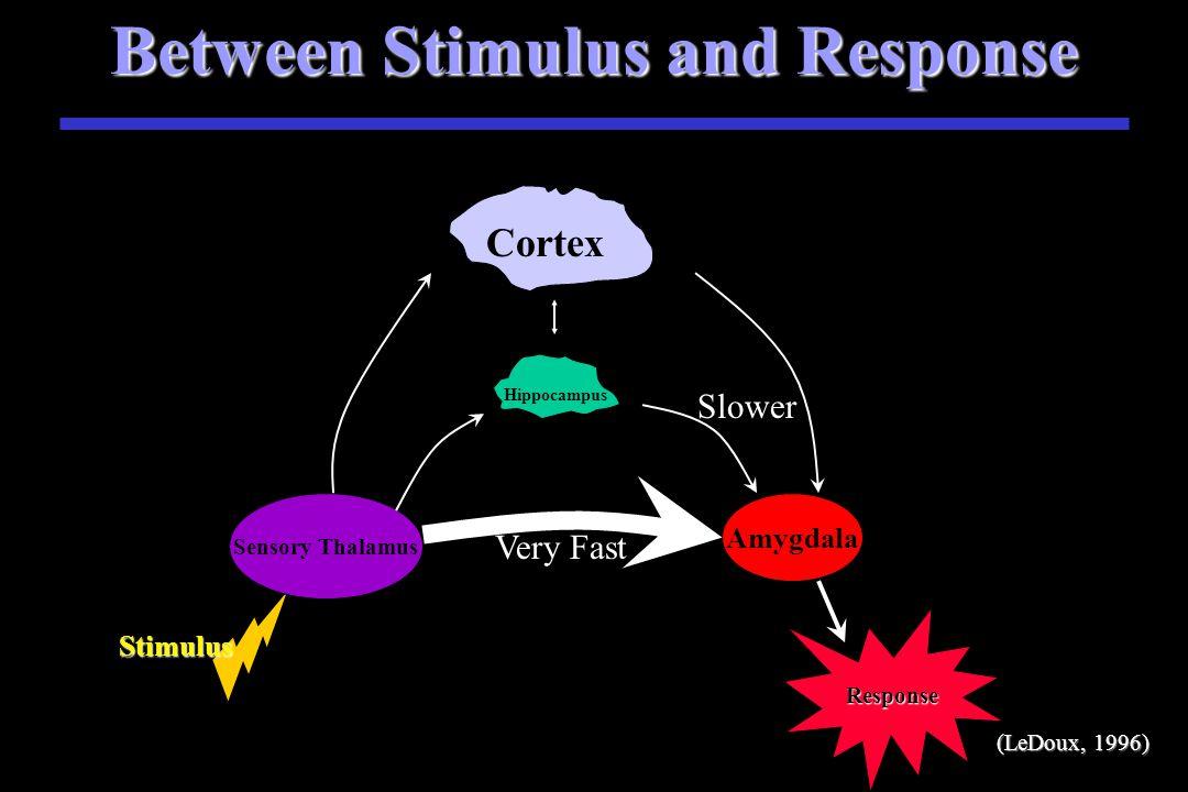 Between Stimulus and Response Stimulus S Stimulus Sensory Thalamus Amygdala Very Fast Slower Hippocampus Response Cortex (LeDoux, 1996 (LeDoux, 1996)