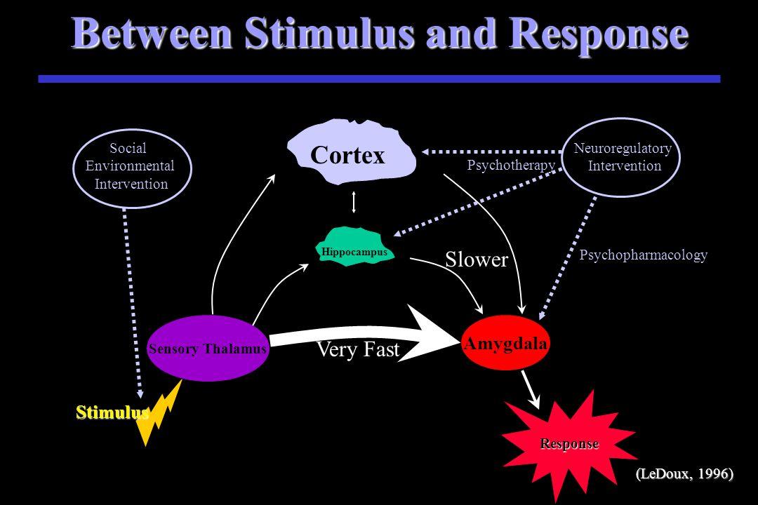 Between Stimulus and Response Stimulus S Stimulus Sensory Thalamus Amygdala Very Fast Slower Response Cortex Hippocampus (LeDoux, 1996)