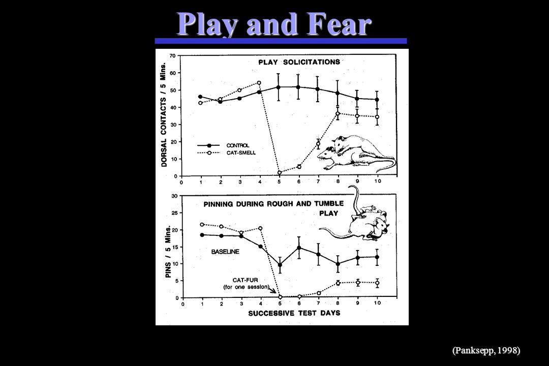 Play (Panksepp, 1998)
